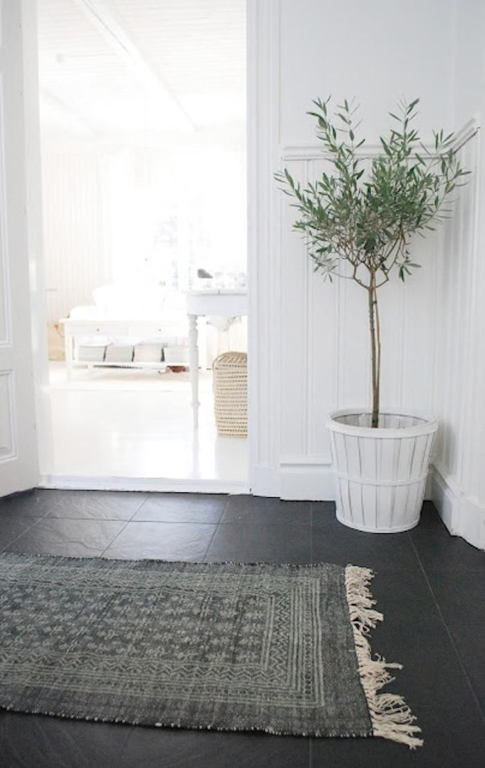 Fresh New Trend Olive Trees And Branches Rue